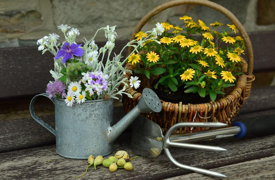 Utiliser l'eau de pluie pour arroser son jardin