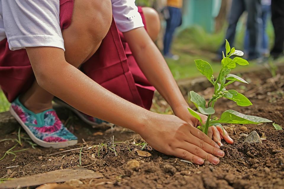 Qu'est ce que la jardinothérapie ?